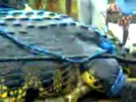Gustave Giant African Crocodile Caught - YouTube