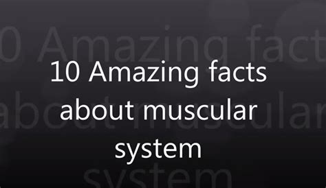 9 Interesting Facts About The Muscular System - HRF