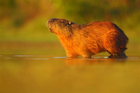 Panama Canal: The wonderful wildlife you need to see!
