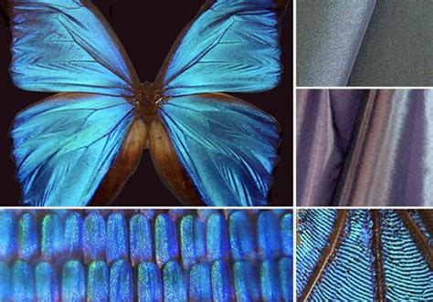 Nature As Mentor and Other Lessons from Biomimicry   Women