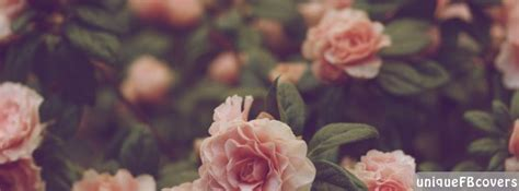 Roses Facebook Covers | Nature Fb Cover - Facebook Covers