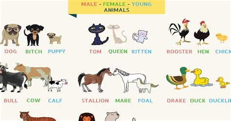 Pet Animals Name In English And Hindi - Pet's Gallery